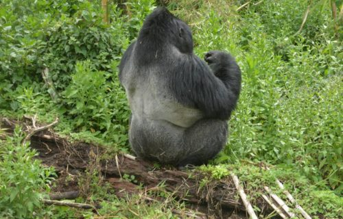 3 Days Gorilla trekking Rwanda Tours