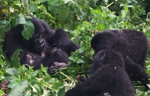 Bwindi Gorilla Habituation from Kigali