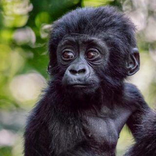 3 Days Luxury Uganda Gorilla Safari Bwindi