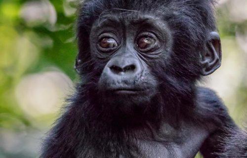 3 Days Luxury Uganda Gorilla Safari Bwindi
