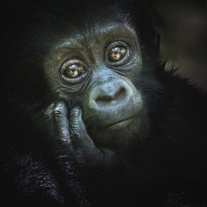 How Much Does it Cost to Go Gorilla Trekking in Uganda