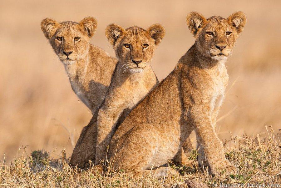 African Safari Tours Trip 2021-22 Best Africa Safari Vacations